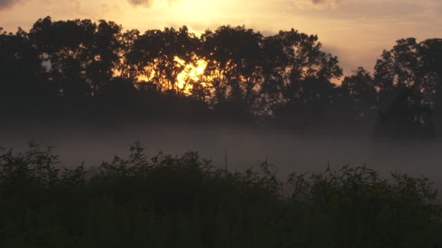 Sunset beams through fog and silhouette trees