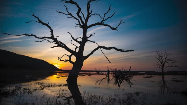 sunset behind a dead tree at porlock salt marsh on may 25, 2021 in exmoor national park, england. - branch stock videos & royalty-free footage