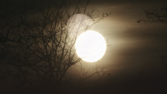 sunset behind bare tree. autumnal landscape - sepia stock videos and b-roll footage