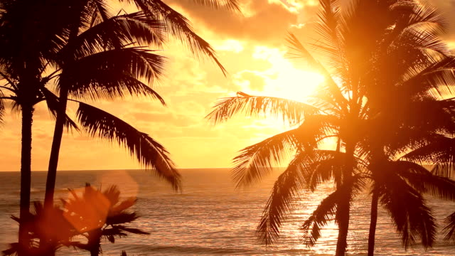 sunset behind palm trees - hawaii islands stock videos and b-roll footage