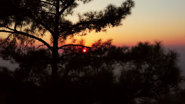 sunset behind the tree - coniferous stock videos & royalty-free footage