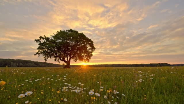MS Sunset behind tranquil,idyllic rural landscape with tree and wildflowers,Slovenia