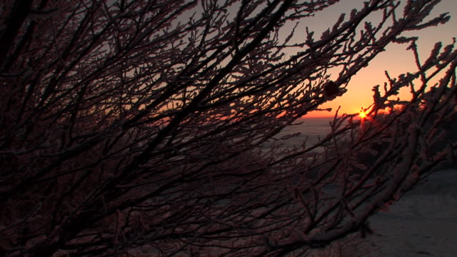 hd: tramonto dietro albero rami - durevolezza video stock e b–roll