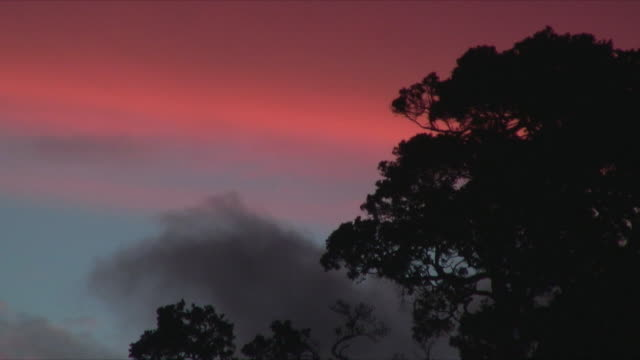 ms, sunset behind tree silhouettes, mimiwhangata, new zealand - treetop stock videos & royalty-free footage