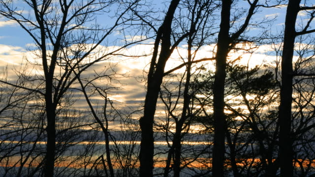 sunset behind trees - bare tree stock videos & royalty-free footage