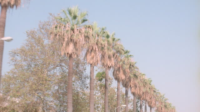 sunset boulevard traffic passes a long row of palm trees near highland avenue in hollywood. - sunset boulevard stock-videos und b-roll-filmmaterial
