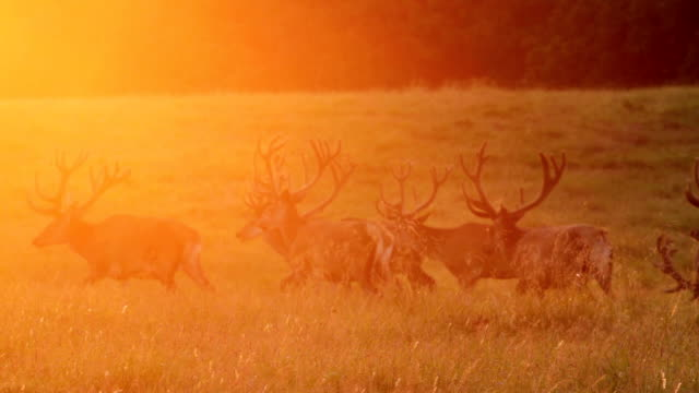 Sunset Elks