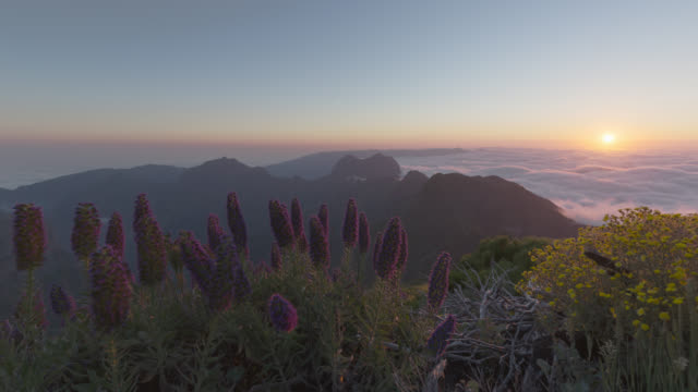 Sunset from Pico Ruivo with Pride of Madeira flowers