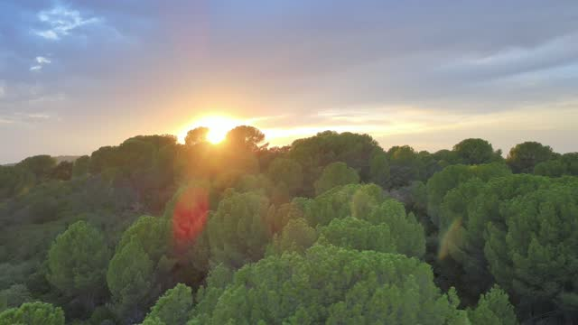 vídeos y material grabado en eventos de stock de sunset from the top of a pine - pinar