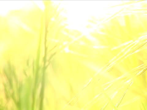vídeos de stock e filmes b-roll de pôr do sol grama fundo-foco diferencial - super exposto