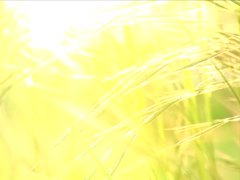 sunset grass background - selective focus - overexposed stock videos & royalty-free footage