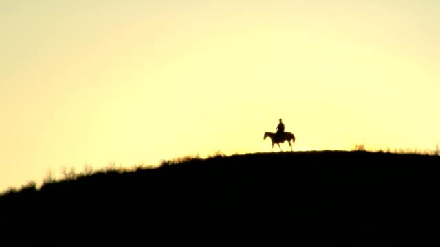 sunset horse walking - cowboy stock videos & royalty-free footage