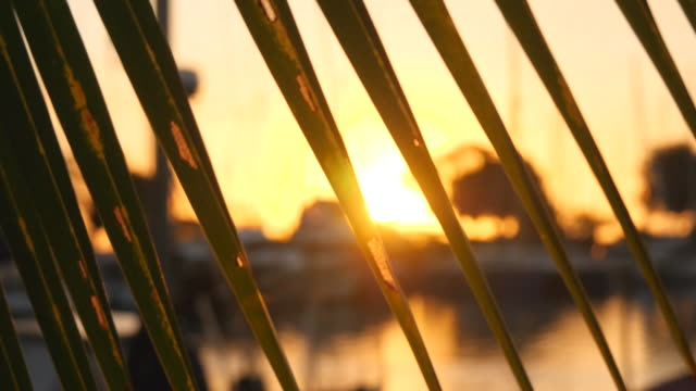 sunset in a marina harbor with a palm tree frond. - slow motion - frond stock videos & royalty-free footage
