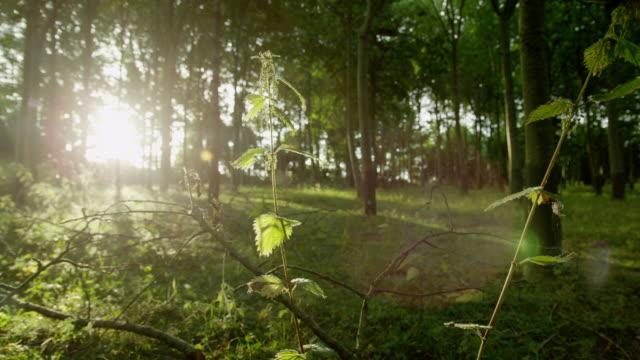sunset in an english woodland. - 不在点の映像素材/bロール