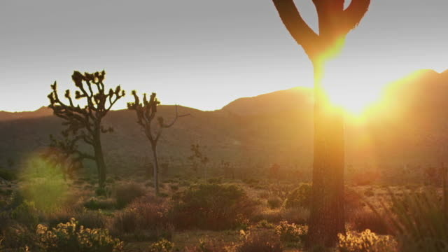 sunset in joshua tree national park - cactus video stock e b–roll
