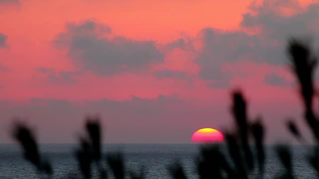 vídeos de stock e filmes b-roll de pôr do sol no mar mediterrâneo - pinaceae