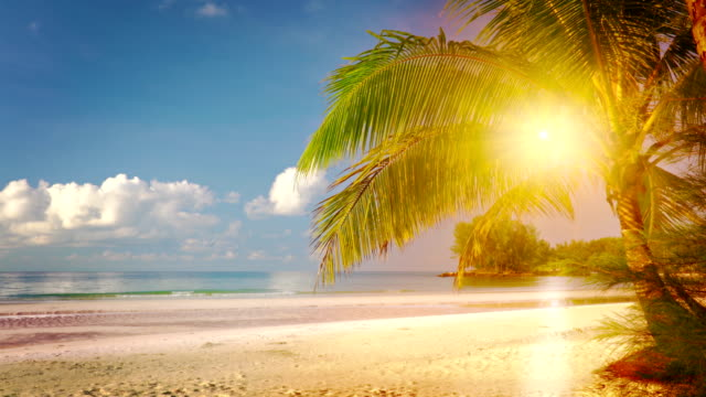 sunset in paradise - idyllic stock videos & royalty-free footage
