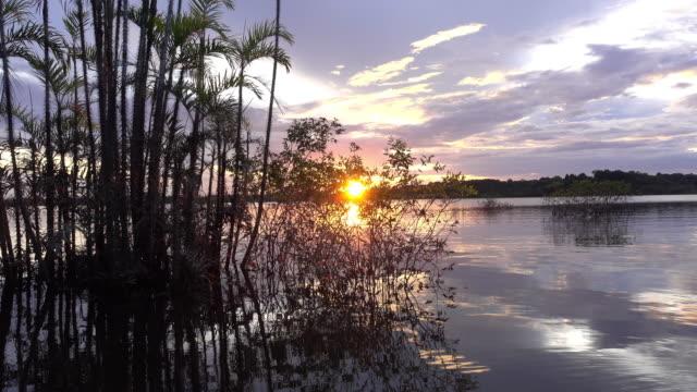 stockvideo's en b-roll-footage met zonsondergang in de cuyabeno wildlife reserve en passeren door sommige boom. - ecuador