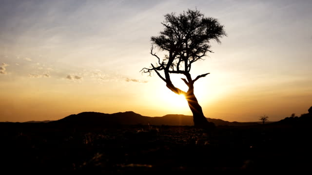 vidéos et rushes de coucher de soleil dans le désert du namib - dune de sable