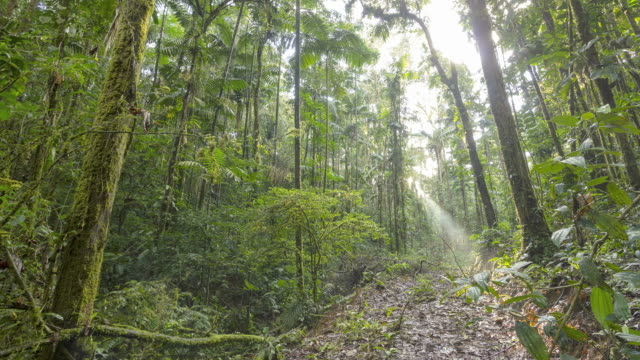 sunset in the rainforest, time-lapse - amazon rainforest stock videos & royalty-free footage