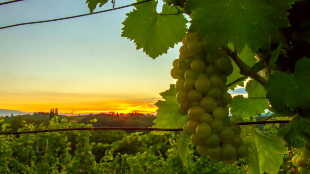 T/L Sunset In The Vineyard