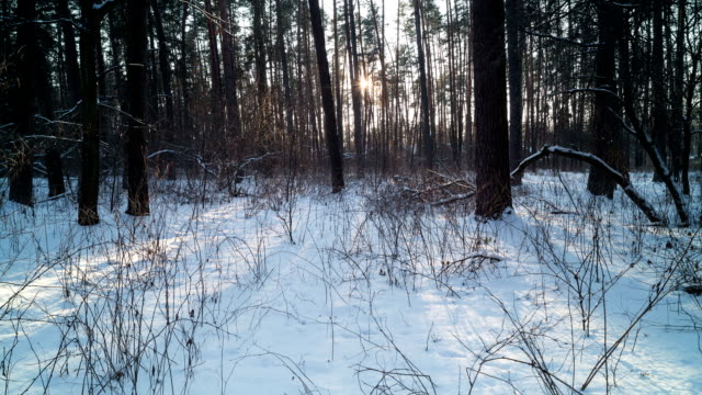 Sunset in winter forest. Time Lapse.