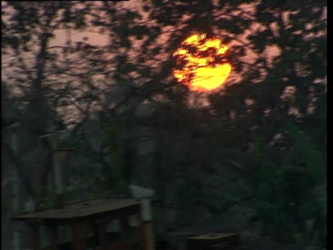 a sunset it seen through trees - bangladesh stock videos & royalty-free footage