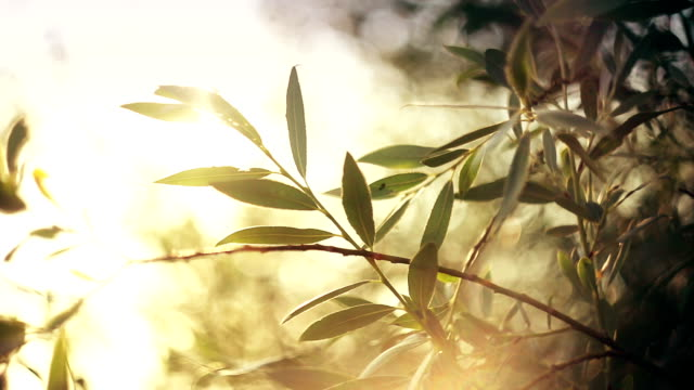 Sunset lights shimmering through the leaves