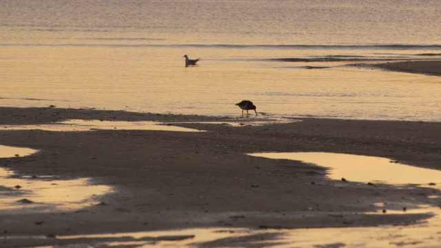 Sunset low tide in New Zealand with birds