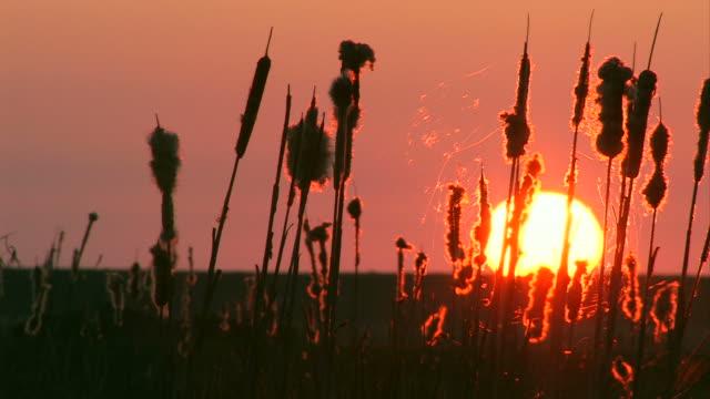 sonnenuntergang in der nähe von wasser/sunset cup coral am wasser - deutsche nordseeregion stock-videos und b-roll-filmmaterial