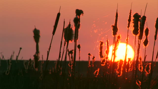 sunset near the water / sonnenuntergang am wasser - sonnenuntergang stock videos & royalty-free footage