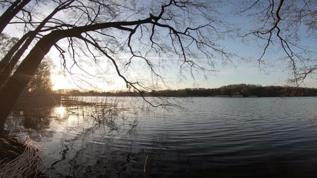 木々の下の湖に沈む夕日 - シネマグラフ点の映像素材/bロール