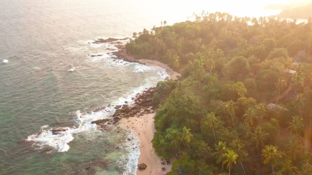 sunset on a sandy ocean beach. beautiful tropical beach with palm trees. vacation at sea. drone footage - sri lankan culture stock videos & royalty-free footage