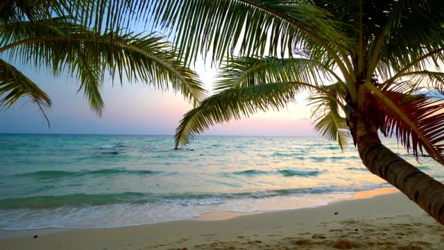 Sonnenuntergang am Strand und Meer mit Kokosnuss-Palme