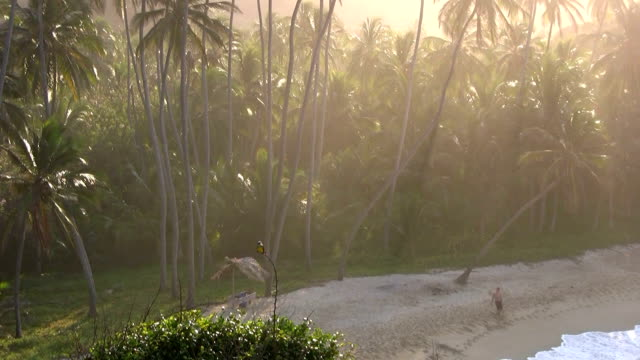 hd: sunset on the beach - tayrona national park stock videos and b-roll footage
