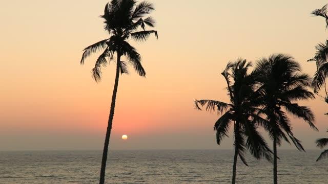 sunset on the beach with coconut palms. sri lanka - sri lankan culture stock videos & royalty-free footage