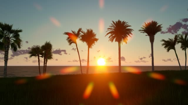 sunset on the beach with palm trees - palm leaf stock videos & royalty-free footage