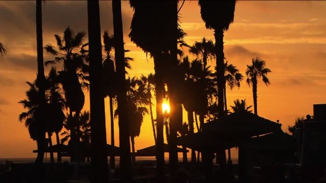 Sunset on Venice Beach Through Palm Trees