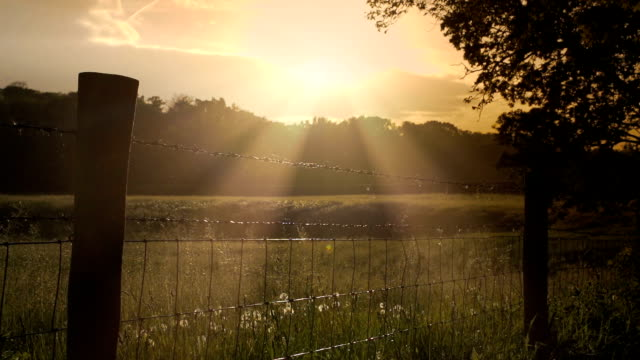 sunset over a british fence with barbed wire - english culture stock videos & royalty-free footage