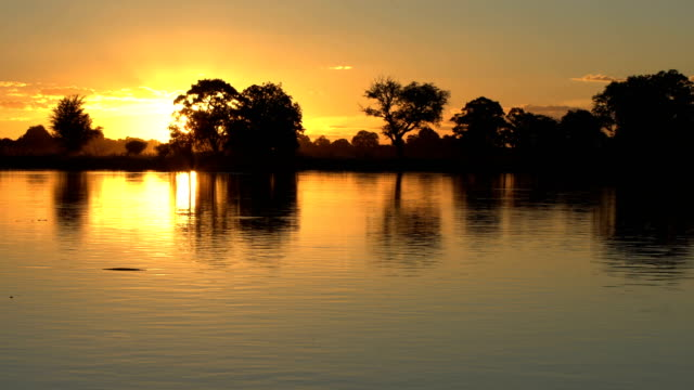 sunset over african river. - acacia tree stock videos & royalty-free footage