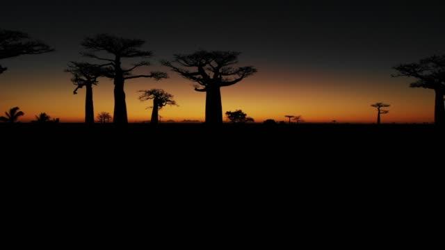 Puesta de sol sobre Alley del baobabs, Madagascar