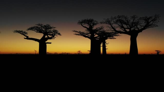 sunset over alley of the baobabs, madagascar - avenue stock videos & royalty-free footage
