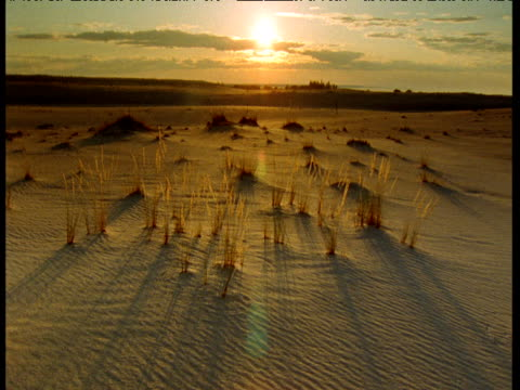 sunset over athabasca dunes, saskatchewan, canada - saskatchewan stock videos and b-roll footage