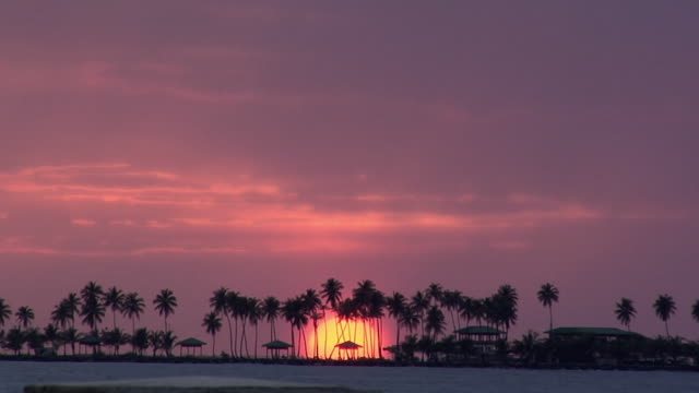 ws sunset over atlantic ocean with silhouettes of palm trees, puerto rico, usa - puerto rico stock videos and b-roll footage