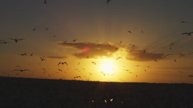 ws sunset over cape gannet colony on bird island - 1 minuto e più video stock e b–roll