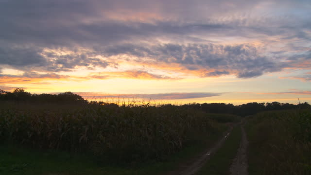 hd dolly: sunset over corn field - cirrocumulus stock videos & royalty-free footage
