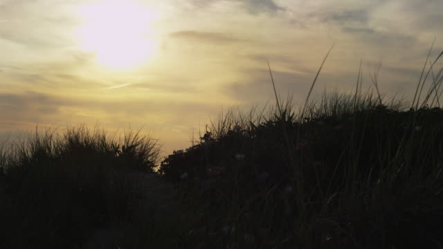 stockvideo's en b-roll-footage met sunset over dune grass on cape cod. - back lit