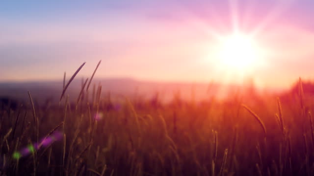 sunset over field - grass family stock videos & royalty-free footage