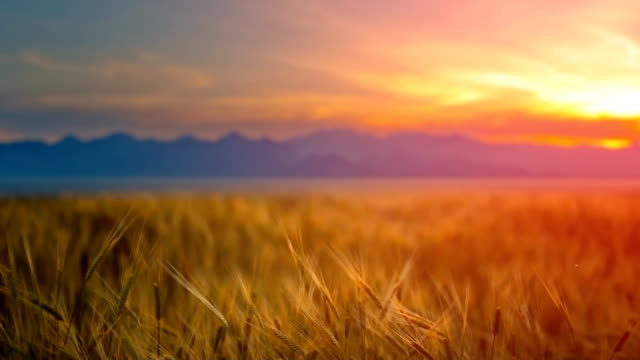sunset over field - twilight stock videos & royalty-free footage