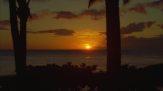 vídeos de stock, filmes e b-roll de ms, sunset over ocean, hawaii, usa - fan palm tree